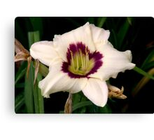White Tiger Lily Portrait. Canvas Print