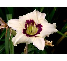 White Tiger Lily Portrait. Photographic Print