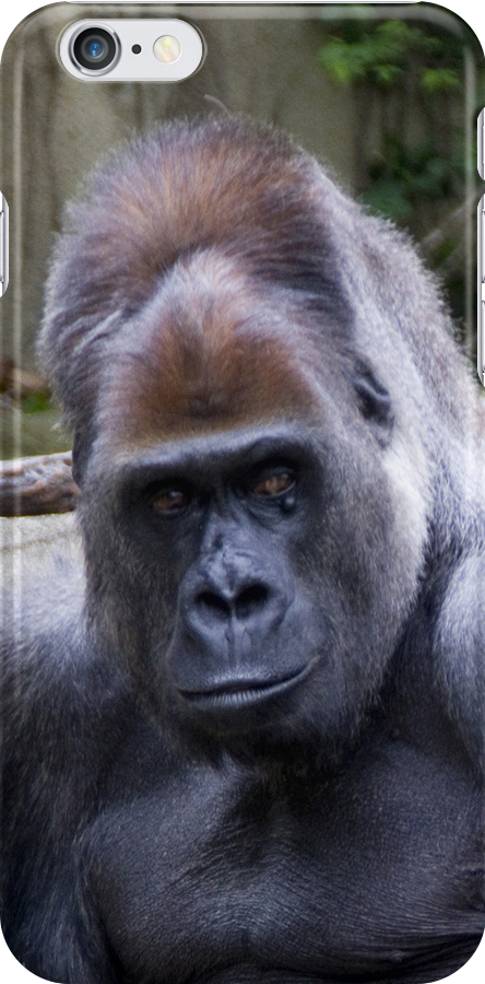 Gorilla looking at you by Lisa Kyle Young
