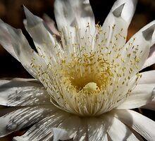 Queen of the Night Blossom  by Saija  Lehtonen