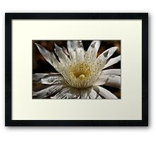 Queen of the Night Blossom  Framed Print