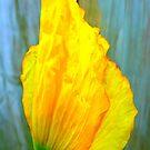 Yellow Poppy iPhone Case by Fara