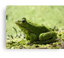 Green slimy frog Canvas Print