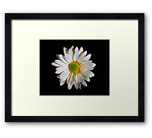 White Daisy Portrait. Framed Print