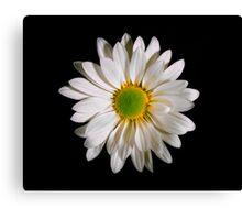 White Daisy Portrait. Canvas Print