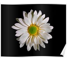 White Daisy Portrait. Poster