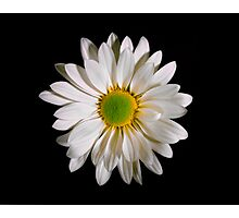 White Daisy Portrait. Photographic Print