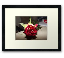 red and yellow tinted rose  Framed Print