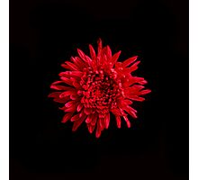 Red Mum Portrait. Photographic Print