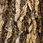 Ponderosa Pine Bark by Lisa Kyle Young