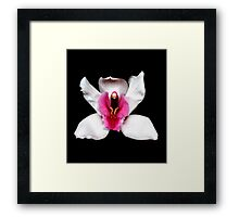 White Cymbidium Portrait #2. Framed Print