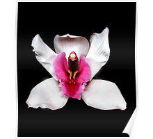 White Cymbidium Portrait #2. Poster