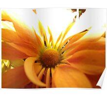 lonely orange flower Poster