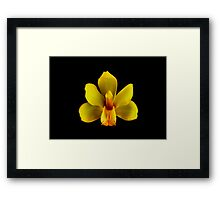 Yellow Cymbidium Portrait.  Framed Print