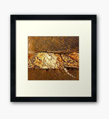 Veined Framed Print