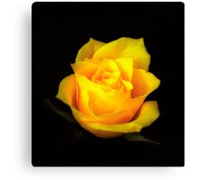 Yellow Rose Portrait. Canvas Print