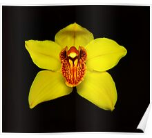 Yellow Cymbidium Portrait #2. Poster