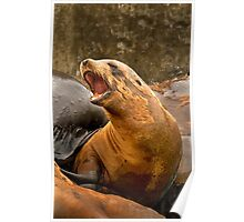 California Sea Lion Poster