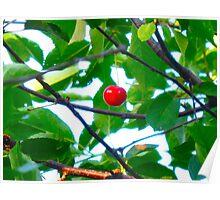 Wild Cherry Poster