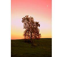 Twilight In The Pasture Photographic Print