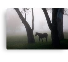 Forest Foal Canvas Print