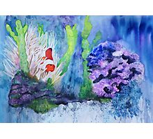 Lonely Clownfish Photographic Print