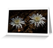 Queen of the Night Blooms  Greeting Card