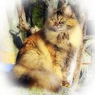 Norwegian Forest Cat by MarianaEwa