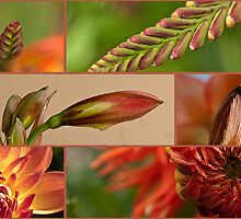 Blossom babies by Celeste Mookherjee