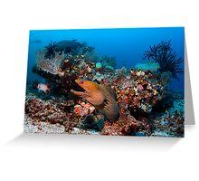 Reef Boss Greeting Card