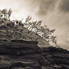 The Hill by Mel Brackstone