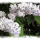 White lilac by Enri-Art