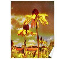 Yellow Echinacea  Van Gogh style Poster
