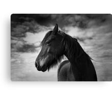 Wind Swept (Horse 1-5609/2) Canvas Print