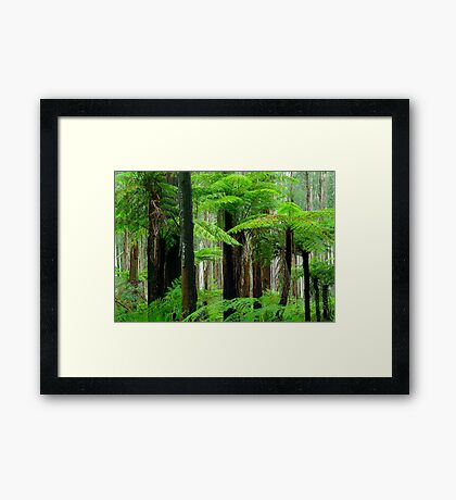 Black Spur Forest Framed Print