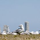 Seagull - See  by ThePhotoFella