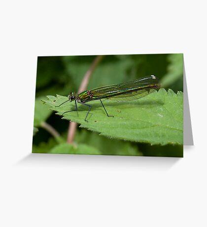 Calopteryx splendens Greeting Card