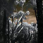 Gardens in Marrakesh Morocco - Infrared by Debbie Pinard