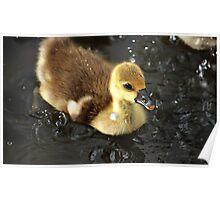 Ducky splashing Poster
