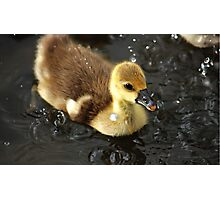 Ducky splashing Photographic Print