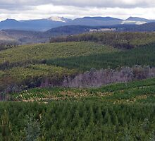 Forestry patterns by Traffordphotos