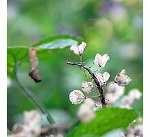 Tender White Bells Photographic Print