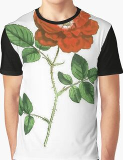 Vintage Red Rose Isolated on White Graphic T-Shirt