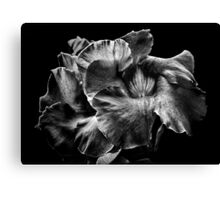 Backyard Flowers In Black And White 2 Canvas Print