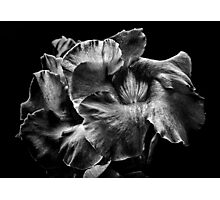Backyard Flowers In Black And White 2 Photographic Print