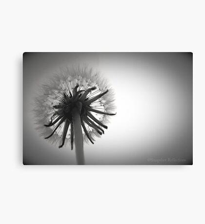 Dandelion Daydreaming Canvas Print