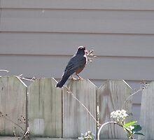 Fence Bird by jesusmyjoy