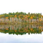 Autumn Lake Reflection by John Butler