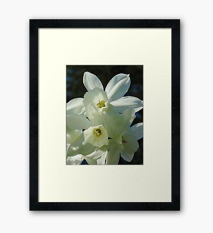 Daffodils 1 Framed Print