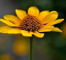 Natures Beauty ~ flower head by Karen  Betts